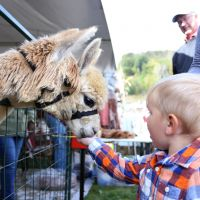 Autumnfest Petting Zoo